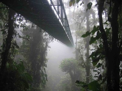 Cloud Forest of Monteverde in Costa Rica