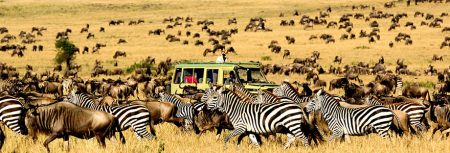 Safari Adventures in Africa - Serengeti National Park is Where You Can See Yearly Movement of Millions of Animals
