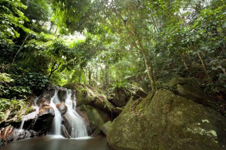Top 7 Jungles to Visit for Your Next Trip!
