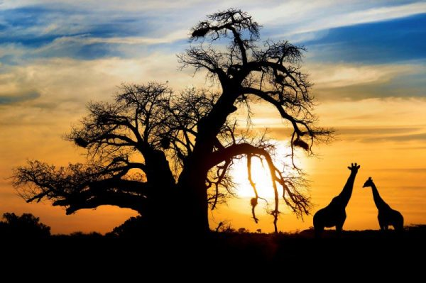 Top 5 Safari Adventures in Africa
