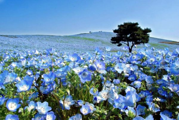 7 Most Stunning Places in Japan