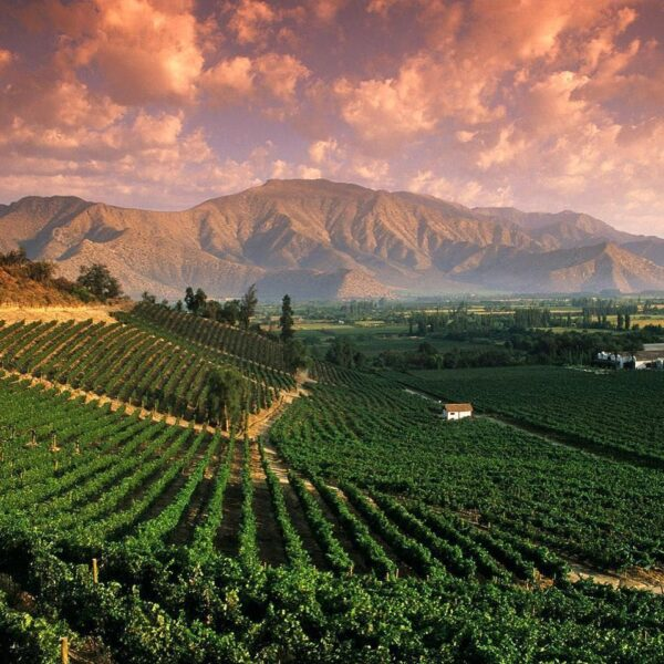 Argentina Tourist Attractions - Mendoza is Where You Can Visit Wineries And Bodegas