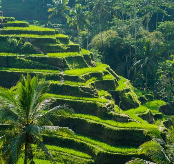 Best Attractions in Bali - Tegalalang Rice Terraces is Where Locals Actually Farm For Food
