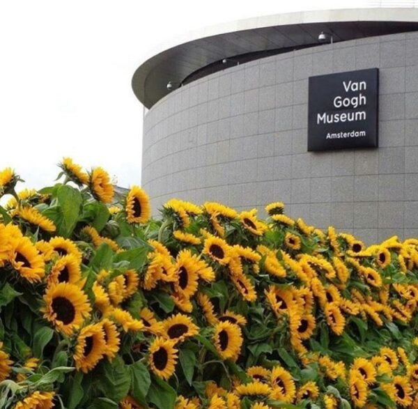 Places to Visit in Amsterdam - Van Gogh Museum Houses Biggest Collection of Van Gogh Paintings