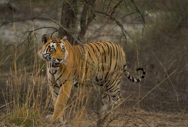 Sights of Rajasthan India, Ranthambhore_national_park National Park