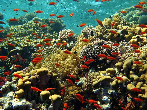 Red Sea Reef is One of The Most Beautiful Places in The World - Africa Travel Tips