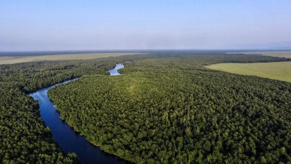 What To Do in Georgia - Kolkheti's National Park is Here to Preserve the Ecosystem of Kolkheti