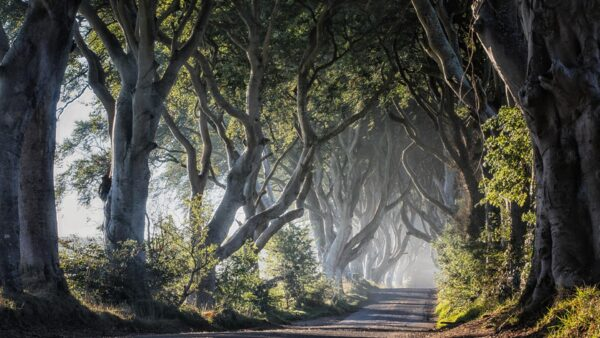 Adventure Bucket List - The Dark Hedges is A Captivating Road in Northern Ireland