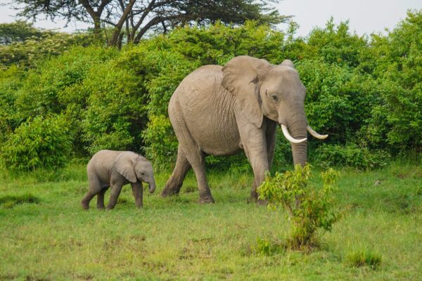 Traveling on Budget - East Africa is Where You Can See Elephants And Rhinos