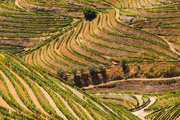 Douro Valley - best tourist attractions in northern Portugal