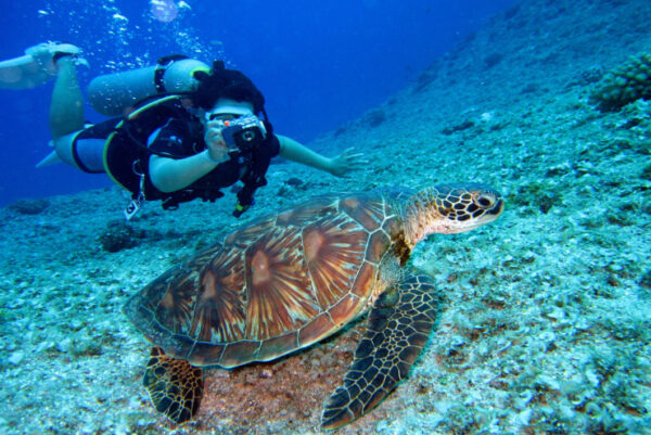 What to Do in Bali - Diving Locations in Bali for Tourists