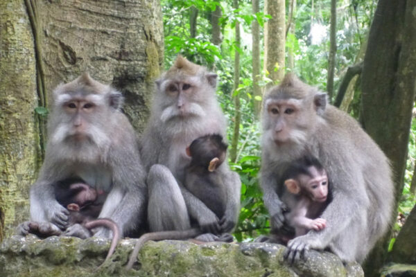 What to Do in Bali - Monkey Forest Sanctuary in Bali