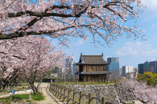 Fukuoka Tourist Attractions With Many Festivals - What to Do in Japan