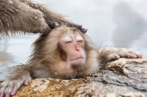 Jigokudani Monkey Park - Japan's most spectacular tourist destinations
