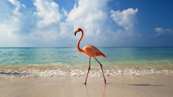 Playa Los Flamencos - beautiful beaches in Cuba