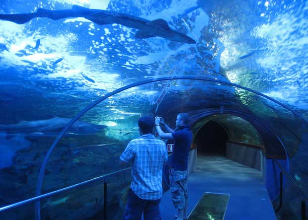 Attractions in San Sebastian - Aquarium Donostia For Marine Animals And Sea Creatures