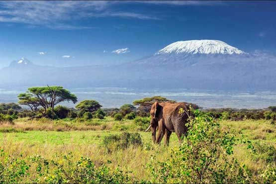Most Amazing Volcanoes in The World - Kilimanjaro With Famous Uhuru Peak