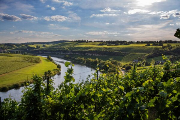 What to Do in Europe - The Moselle is Famous For Their Cuisine And Scenery