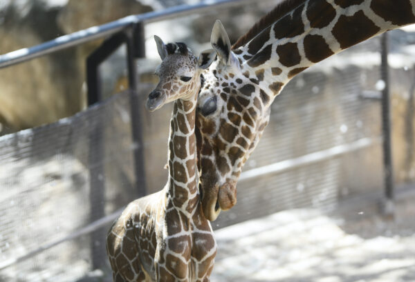 Doha Tourist Attractions - Doha Zoo is The Best to See Some Traditional Zoo Animals