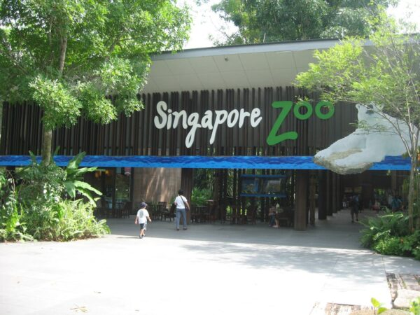 Singapore Tourist Attractions Guide - Singapore Zoo Has Night Ride And Jurong Bird Park