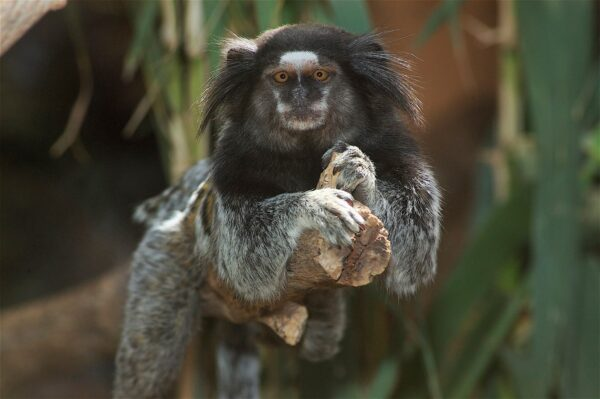Tenerife Tourist Attractions Guide - Tenerife Zoo Also Famous As Loro Park