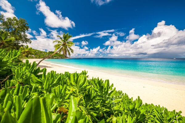 Anse Intendance Has Turtle Here Between October and February - Amazing Beaches in Seychelles