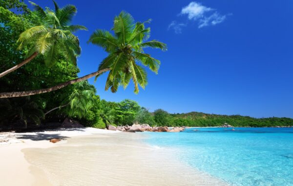 Amazing Beaches in Seychelles - Anse Lazio Offers Shades of Takamaka Trees For Resting