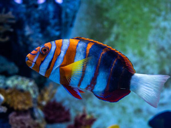 Blue Zoo Aquarium Oklahoma City - Best Oklahoma City Attractions For Travelers