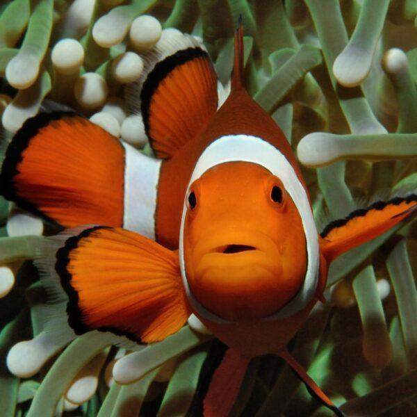 A Guide to Aquariums in Georgia, USA - Flint RiverQuarium Has Over 120 Unique Wildlife And Sea Creatures
