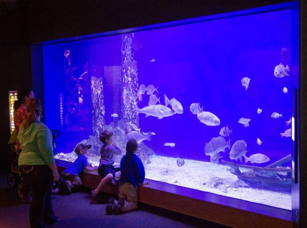 Visiting Mississippi Museum of Natural Science - Fun Things to Do Near MS