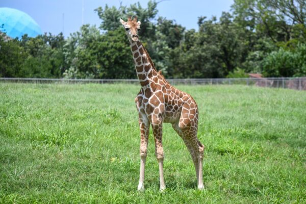 Best Oklahoma City Attractions For Travelers - Oklahoma City Zoo is Suitable For Children