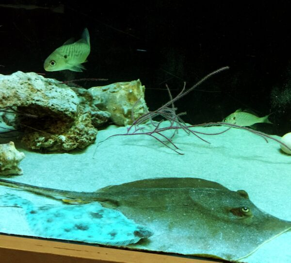 What To Do in USA - Tybee Island Marine Science Center is Located on Tybee Island
