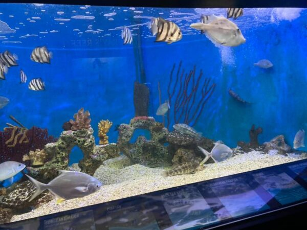What To Do in USA - UGA Marine Education Center and Aquarium Has 16 Exhibit Tanks