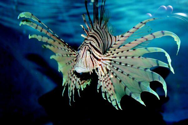 Aquarium & Shark Lab by Team ECCO - Travelers Guide to Aquariums in NC, USA