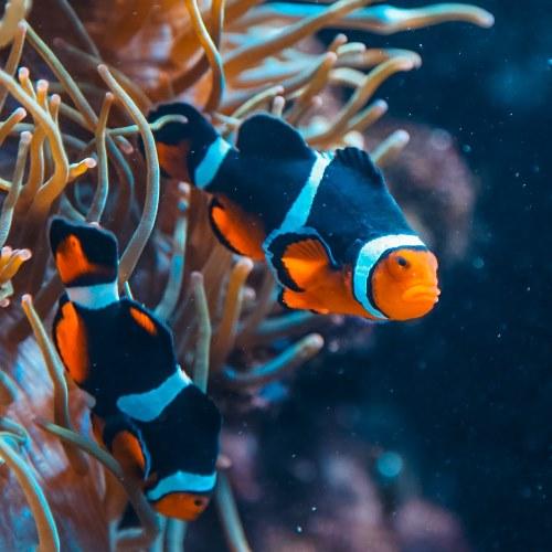 Travelers Guide to Aquariums in NC, USA - North Carolina Aquarium at Fort Fisher