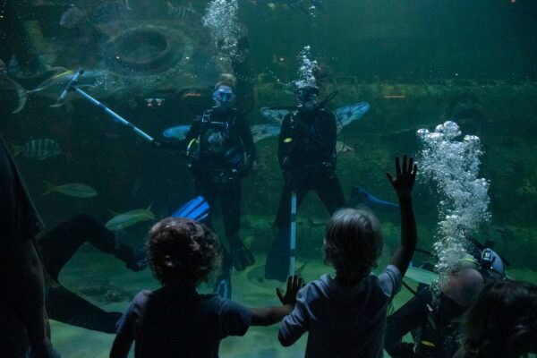 North Carolina Aquarium at Pine Knoll Shores - Travelers Guide to Aquariums in NC, USA