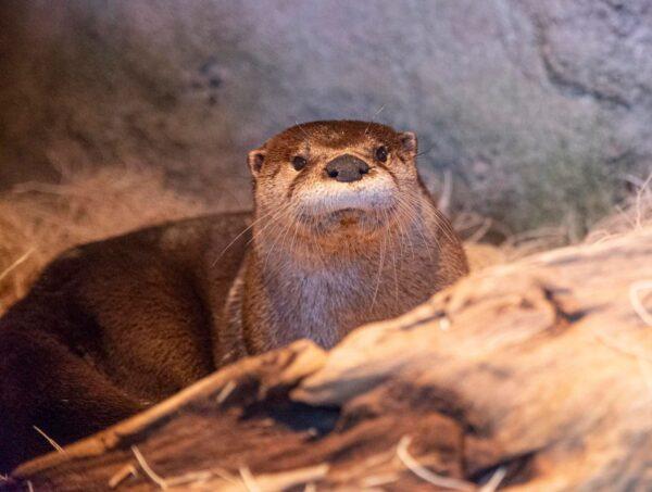 Travelers Guide to Aquariums in NC, USA - North Carolina Aquarium on Roanoke Island