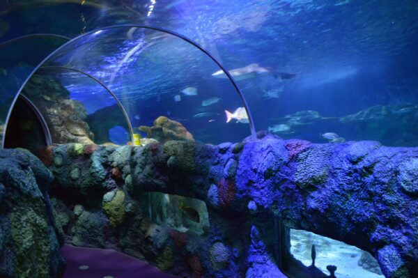 United States Travel Tips - SEA LIFE Charlotte-Concord Has Branches in in Arizona And Kansas City
