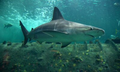 Travelers Guide to Aquariums in NC, USA