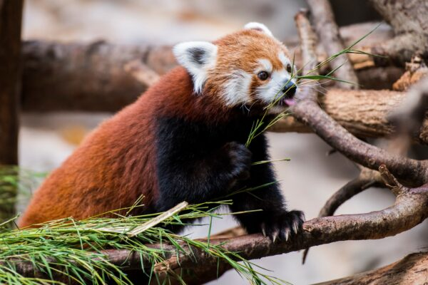 Travelers Guide to Minnesota Zoos
